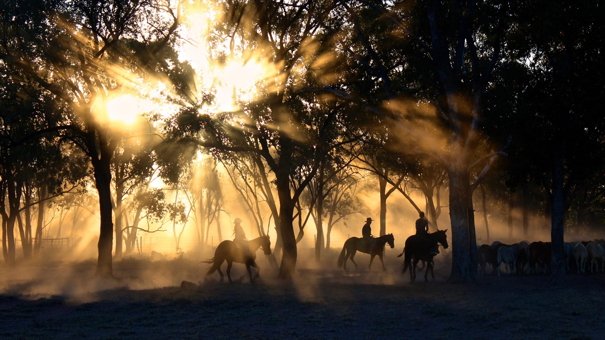 Ängelholms Terrängryttare - Upplev fantastisk natur från hästryggen på anlagda ridslingor